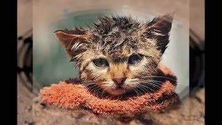Самое грустное видео/видео про котов и кошек
