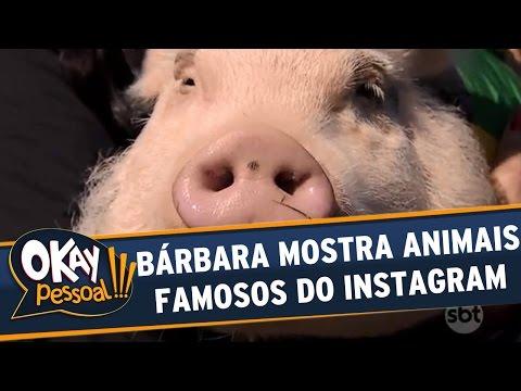Okay Pessoal!!! (16/08/16) - Terça -  Bárbara mostra animais famosos do Instagram