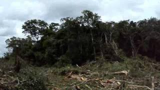 DESMATAMENTO -  o melhor video de desmatamento do youtube