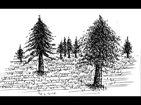 Learn to Draw Landscapes in Pen and Ink: Demo 17