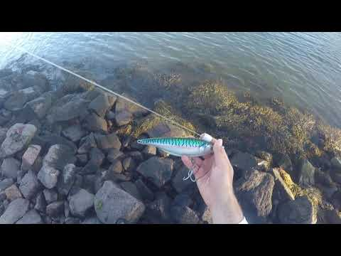 How To Use A Sebile Stick Shadd In The Cape Cod Canal