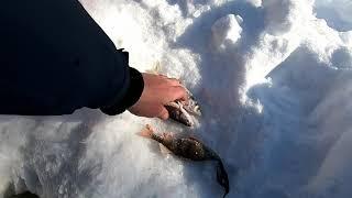 Зимняя рыбалка в марте часть 1