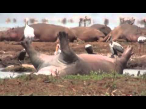 Safari am Lake Manyara
