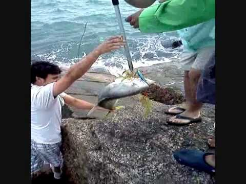 Kingfish at the jetties doovi for South padre island fishing pier