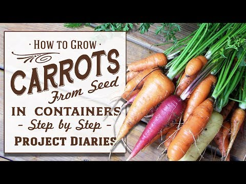★ How to: Grow Carrots from Seed in Containers (A Complete Step by Step Guide)