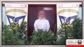 شاهد فيديو ضبط ضبط أكبر مشتل لزراعة الماريجوانا المخدرة داخل فيلا سكنية