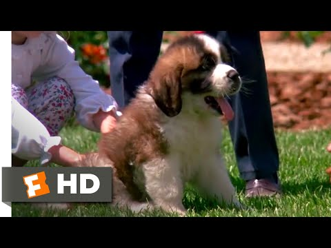 Beethoven (1992) - Big Puppy, Big Dog Scene (3/10) | Movieclips