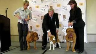 Uno meets Dogue de Bordeaux at Westminster dog show press conference