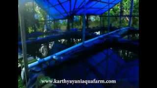 karthyayani aqua fishfarm -  Ornamental fish farm in Kottat - Chalakudy