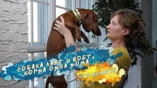 Как отучить собаку лаять одну дома?