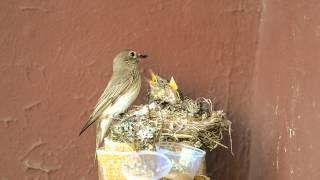 Как птица кормит птенцов