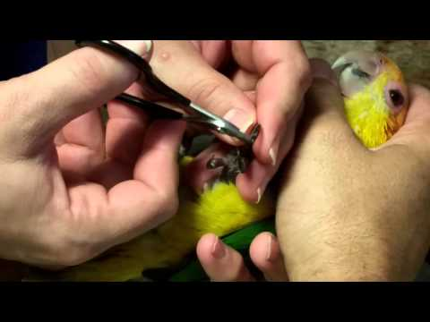 Kiki gets her nails trimmed