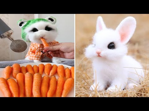 Funny and Cute Baby Bunny Rabbit Videos - Baby Animal Video Compilation #11 (2021)
