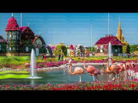 Dubai miracle garden timelapse with over 45 million flowers in a sunny day, United Arab Emirates