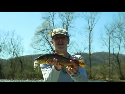 East Tennessee Dreamin' - Fly Fishing The South Holston And Watauga