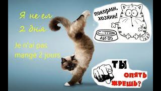 Приколы про котов, кошек и собак.Лучшее видео.#7. Коты воришки 2.