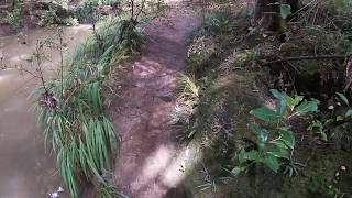Bushwalk through Albany Totara Walkway Albany New Zealand