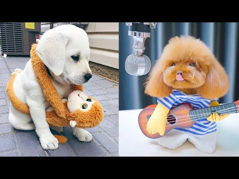 Baby Dogs – Cute and Funny Dog Videos Compilation #22 | Aww Animals
