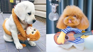Baby Dogs - Cute and Funny Dog Videos Compilation #22 | Aww Animals