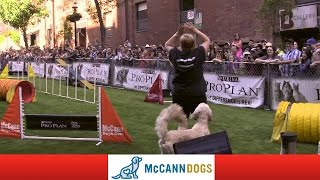 Dog Agility In Toronto At Woofstock '13, Hits & Misses:)