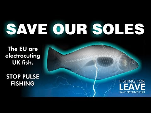 Electric Pulse Fishing on LBC