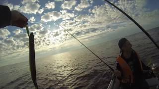 Рыбалка на Ладоге лето 2017. Бешеный клёв окуня на дорожку.