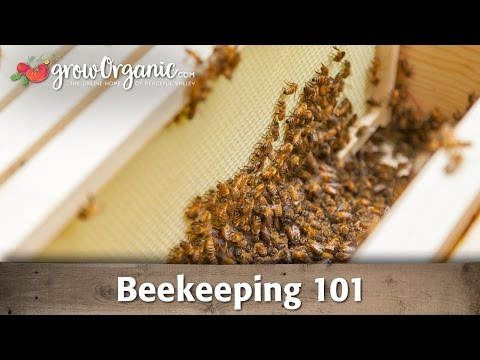Beekeeping for Beginners -- Hive Set Up