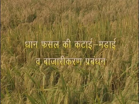 Krishi Darshan I Paddy Harvesting and Marketing Management