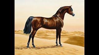 الخيل العربية الرماية بالقوس القديم حسان الجهني عبيد العوني Arabian horse & Bow
