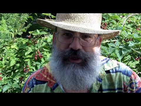 Grow Your Own Food Blackberries