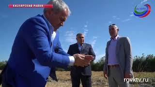 Дагестан - на втором месте в России по производству риса