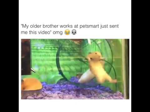 My older brother works at petsmart just sent me this video omg
