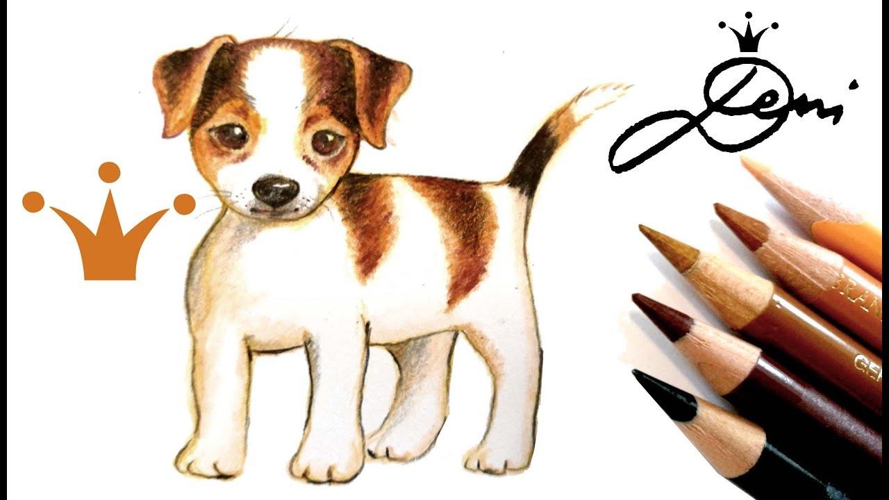 Jack Russell Terrier Hund Zeichnen Lernen How To Draw A Cute