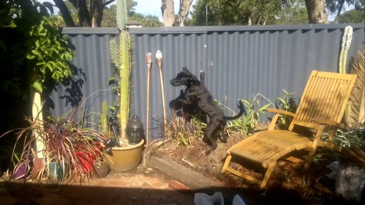 reducing dog barking and jumping at fence lines dog charming