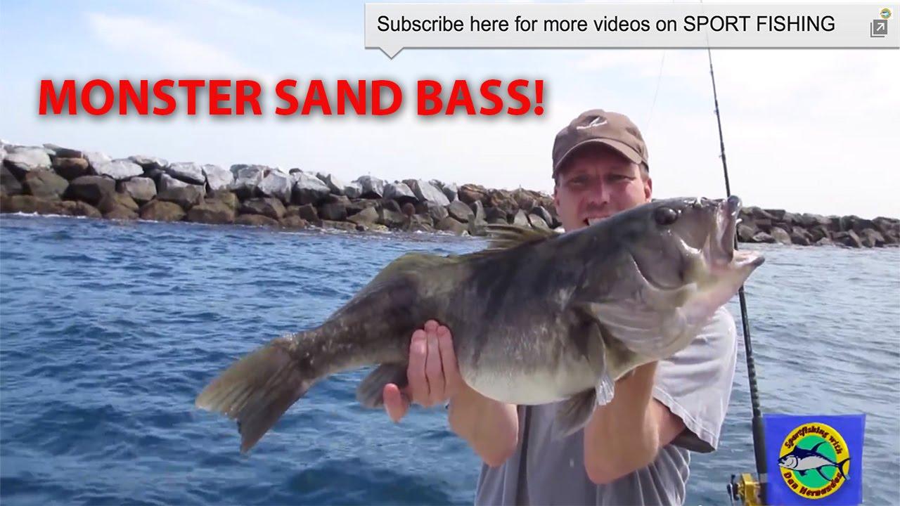 Dan hernandez catches a monster sand bass today long for Long beach sport fishing