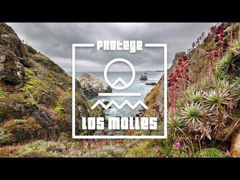 """""""PROTEGE LOS MOLLES"""" (Documental), Salvemos la Reserva Puquén."""