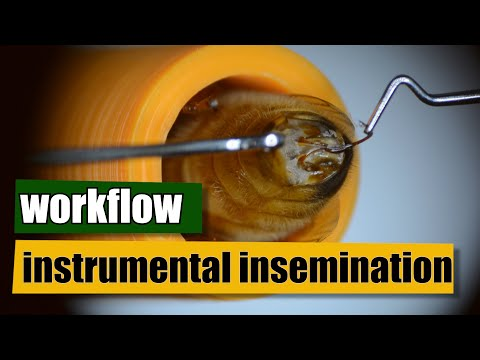 Workflow Instrumental Insemination