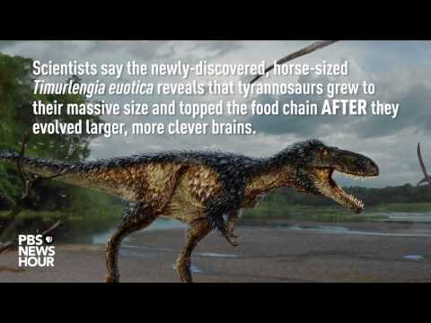 Missing Link Found In Tyrannosaur Head Development