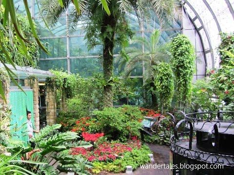 Singapore Changi International Airport Butterfly Garden