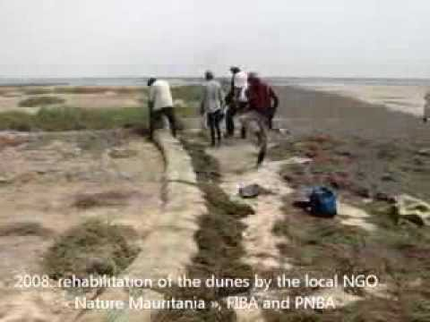 News from Mauritania, Spoonbills of Nair project implementat