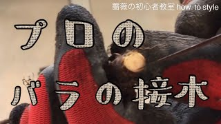 Rose shop🥀 ▷️YouTube menu 兵庫県宝塚市にございますNew Rose と言う ...