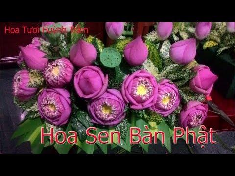 cấm hoa sen tại kienthuccuatoi.com