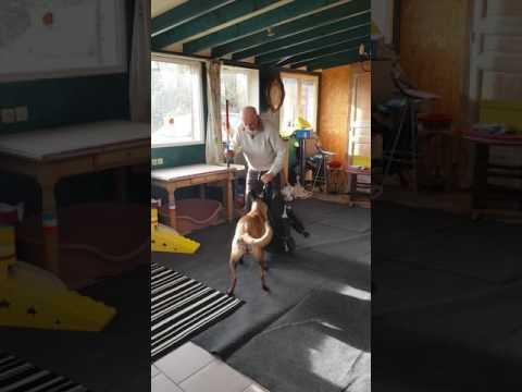 Spectacle de chien Kentra la championne Attaque