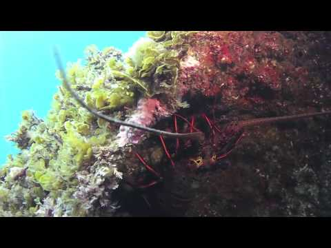Aquanutics Dive:  Catalina Island in June 2015