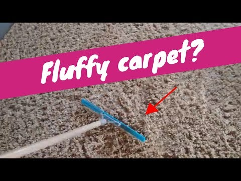 How To Fluff Carpet | Rendall's Cleaning