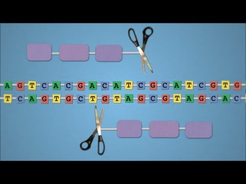 Method of the Year 2011: Gene-editing nucleases - by Nature Video