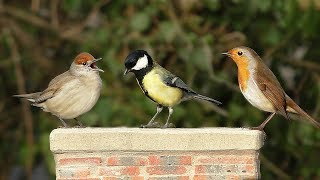 Video for Cats - Beautiful Birds in My Garden NEW ✔️