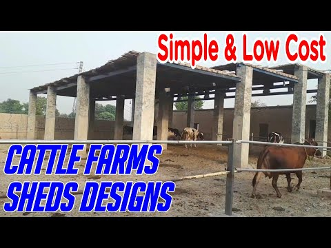 Low Cost Cattle Farming Sheds Designs In Pakistan / India
