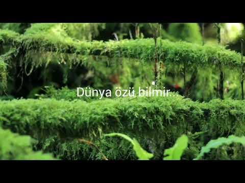 """""""Dünya özü Bilmir..."""" Şeir: Vahid Əziz"""