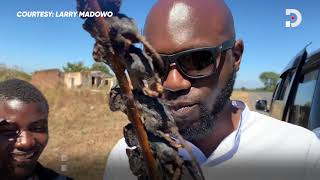 Larry Madowo discovers his love for mice as a delicacy